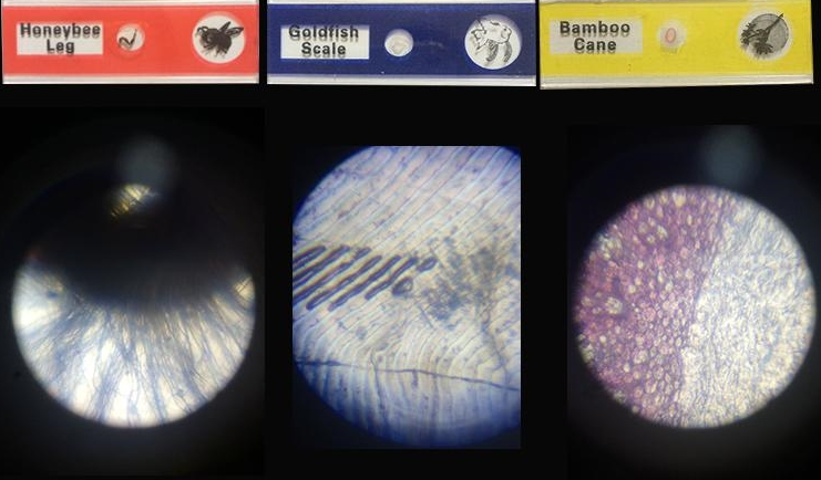 กล้อง microscope สำหรับเด็ก,กล้องจุลทรรศน์สำหรับเด็ก,ของเล่นวิทยาศาสตร์สำหรับเด็ก,ชุด science kit,วิทยาศาสตร์สำหรับเด็ก,ของเล่นแนวสอบสาธิต,ของเล่นเตรียมสอบสาธิต,ของเล่นติวสอบสาธิต
