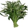 เก็บผักบุ้งสดให้กรอบนาน ต้องใช้ เครื่องซีลสูญญากาศ