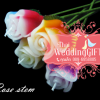 เทียนหอมดอกกุหลาบมีก้าน ดอกตูมและดอกบาน แพ็คถุงแก้ว ผูกเชือกพร้อมใบไม้