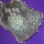 เหรียญพระเทพวรคุณ (อ่ำ ภัทราวุโธ) วัดมณีชลขัณฑ์ จ.ลพบุรี ปี2506 thumbnail 6
