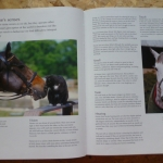 RACEHORSE: The Complete Guide to the World of Horse Racing